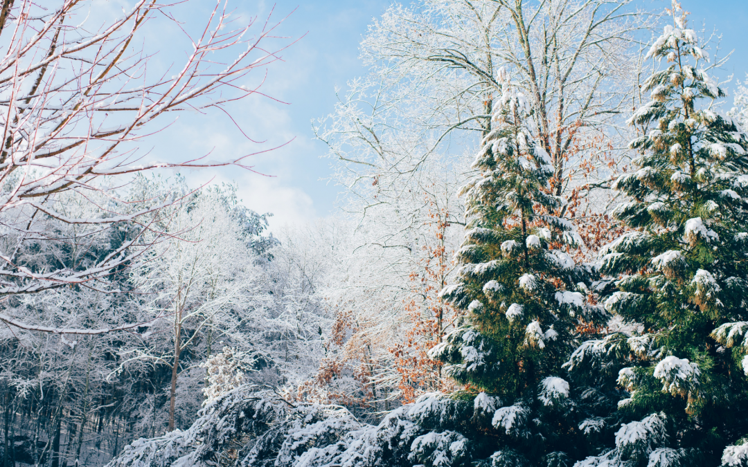 Winter Landscaping Projects You Need to Look Into ASAP